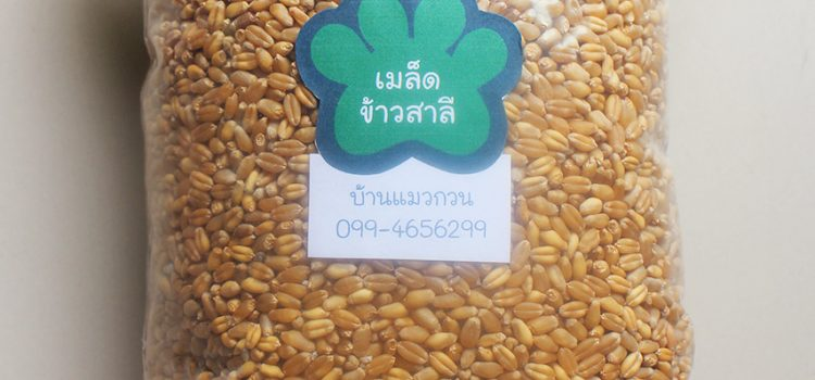 Wheatgrass Seed for Sale