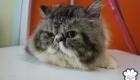 อาบน้ำ ตัดขนแมว เชียงใหม่