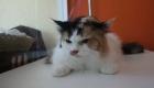 อาบน้ำตัดขนแมว